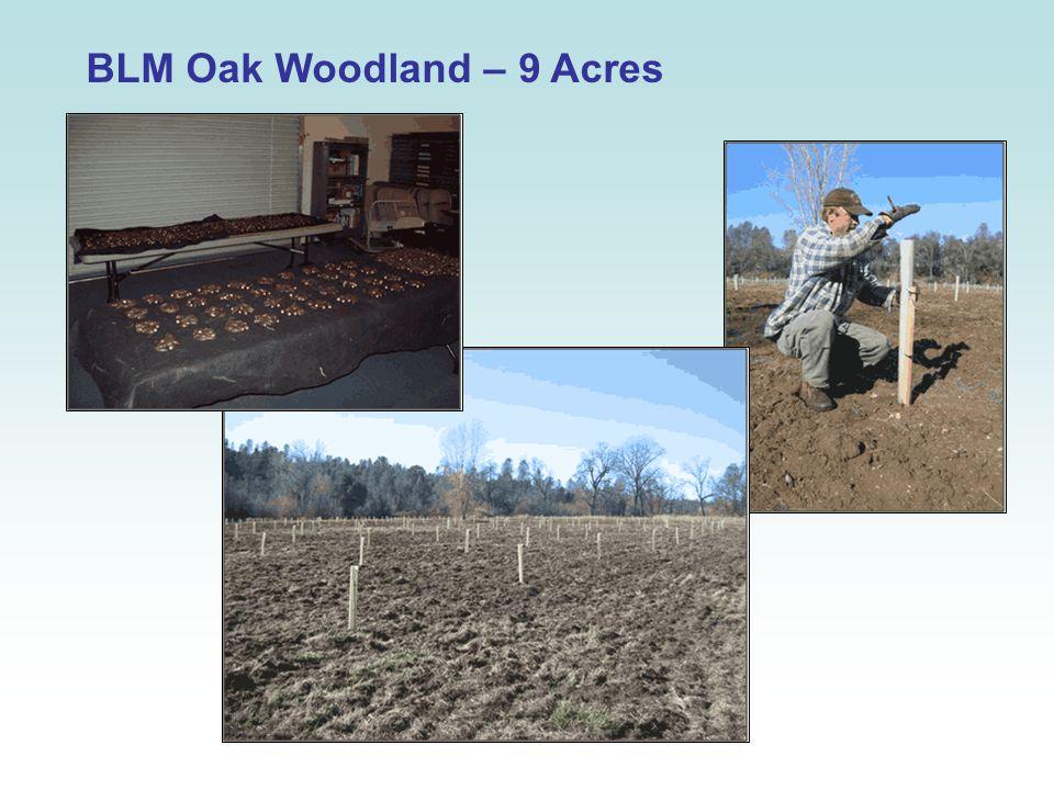 BLM Oak Woodland – 9 Acres