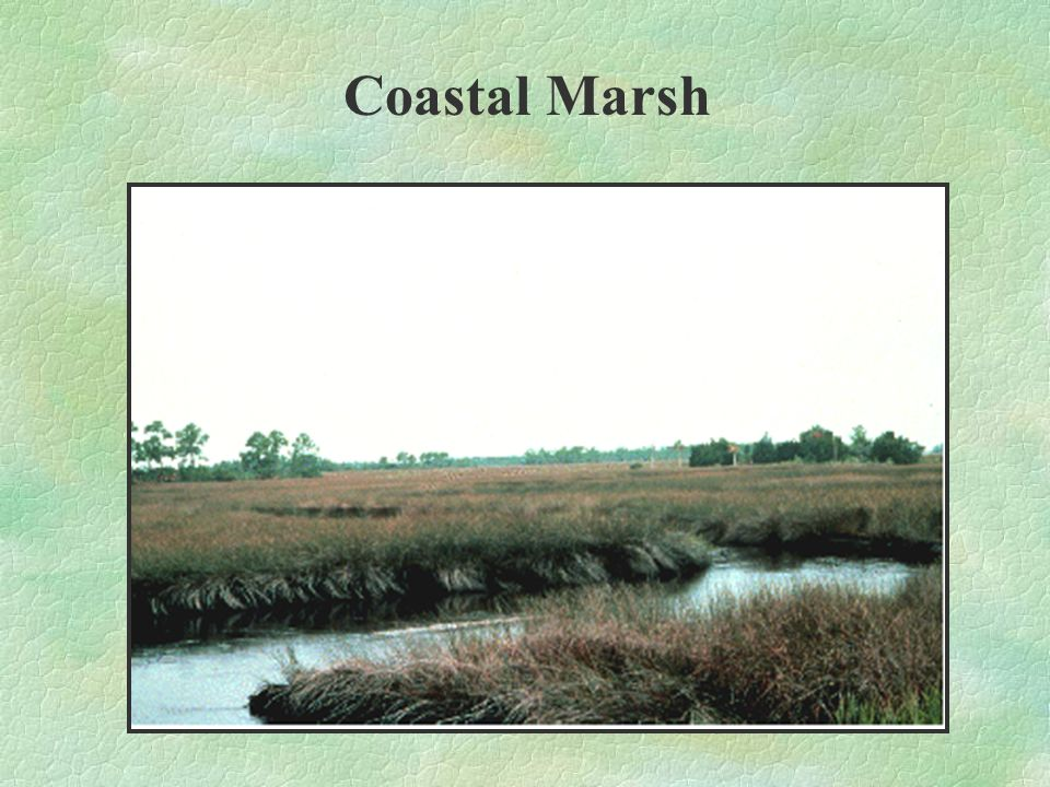 Coastal marshes and beaches