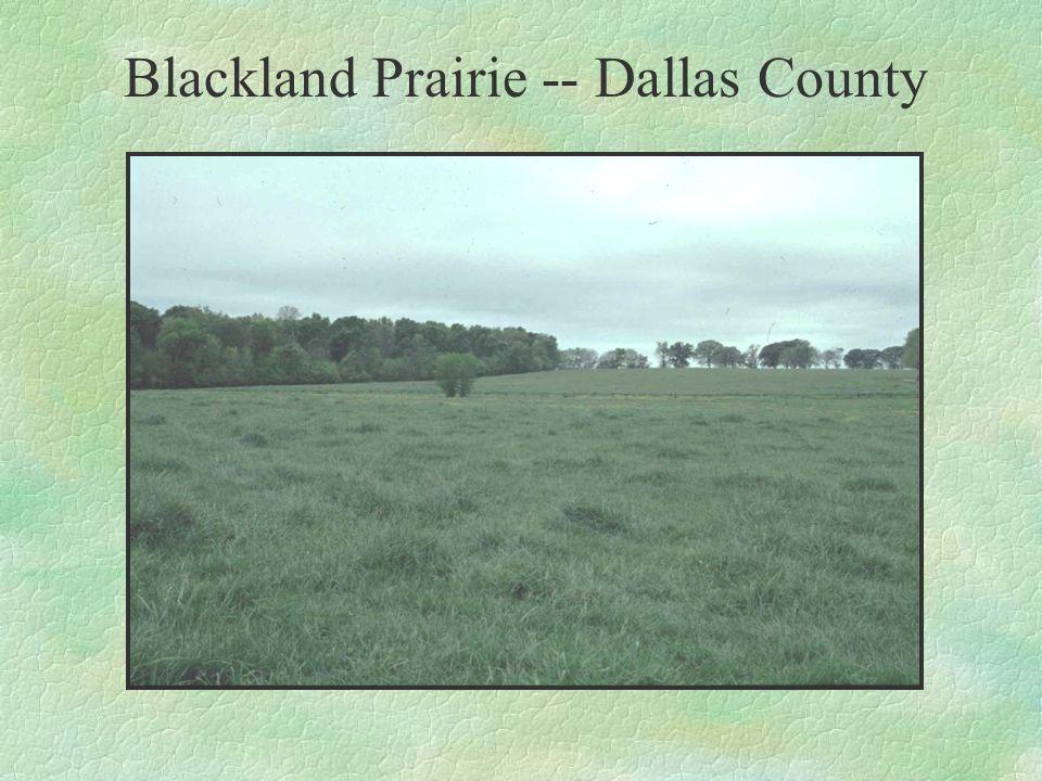 Blackland Prairie -- Dallas County