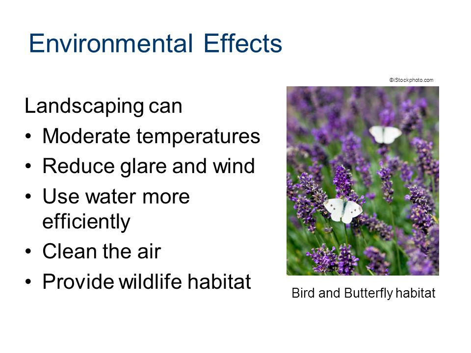 Environmental Effects Landscaping can Moderate temperatures Reduce glare and wind Use water more efficiently Clean the air Provide wildlife habitat Bird and Butterfly habitat ©iStockphoto.com