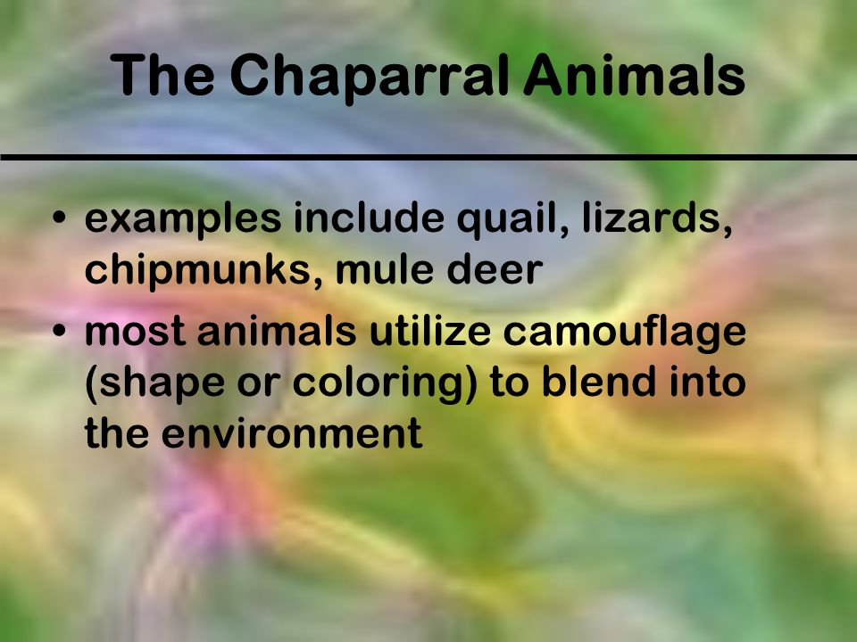 The Chaparral Animals examples include quail, lizards, chipmunks, mule deer most animals utilize camouflage (shape or coloring) to blend into the envi