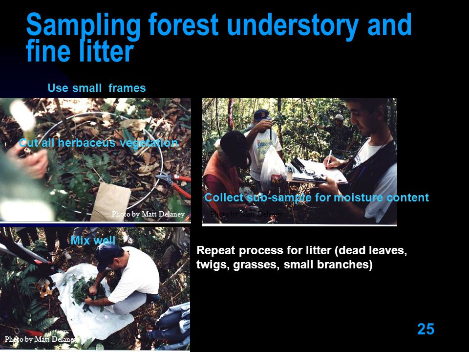 25 Sampling forest understory and fine litter Photo by Matt Delaney Repeat process for litter (dead leaves, twigs, grasses, small branches) Use small