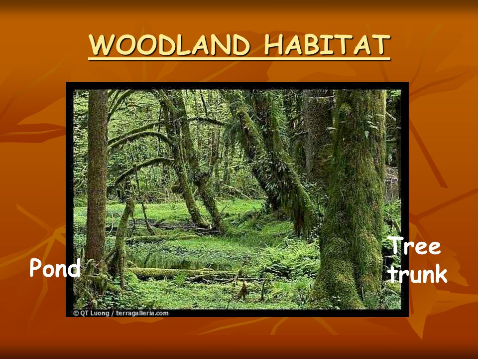 WOODLAND HABITAT Pond Tree trunk