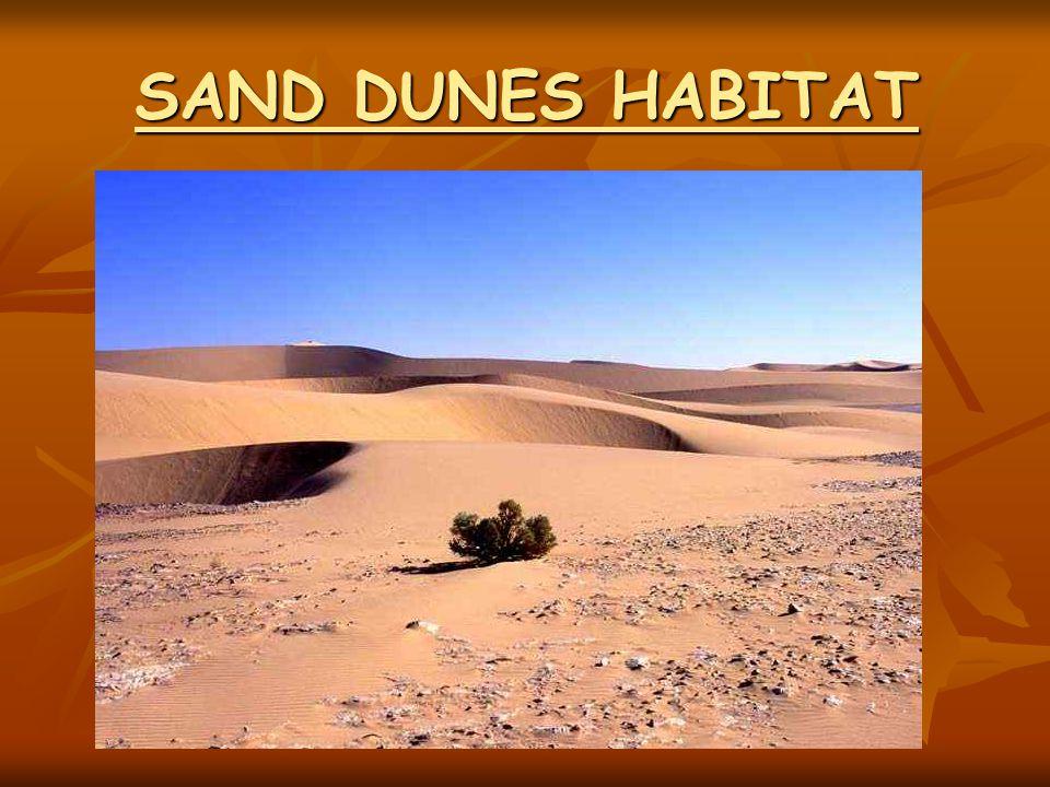 SAND DUNES HABITAT