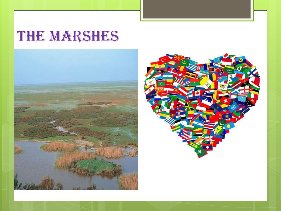 THE MARSHES  The marshes represent approximatly 50% of doñana park the major ecosystem of doñana, which is 27.000 ha.The different seasons of the yea
