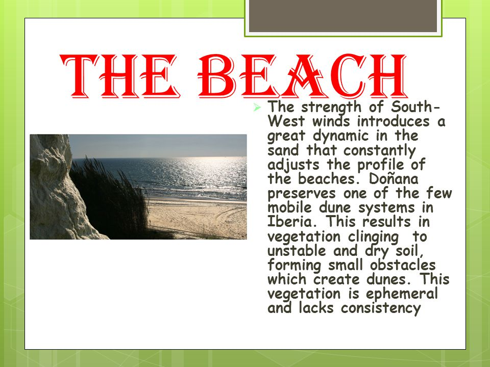  The strength of South- West winds introduces a great dynamic in the sand that constantly adjusts the profile of the beaches.
