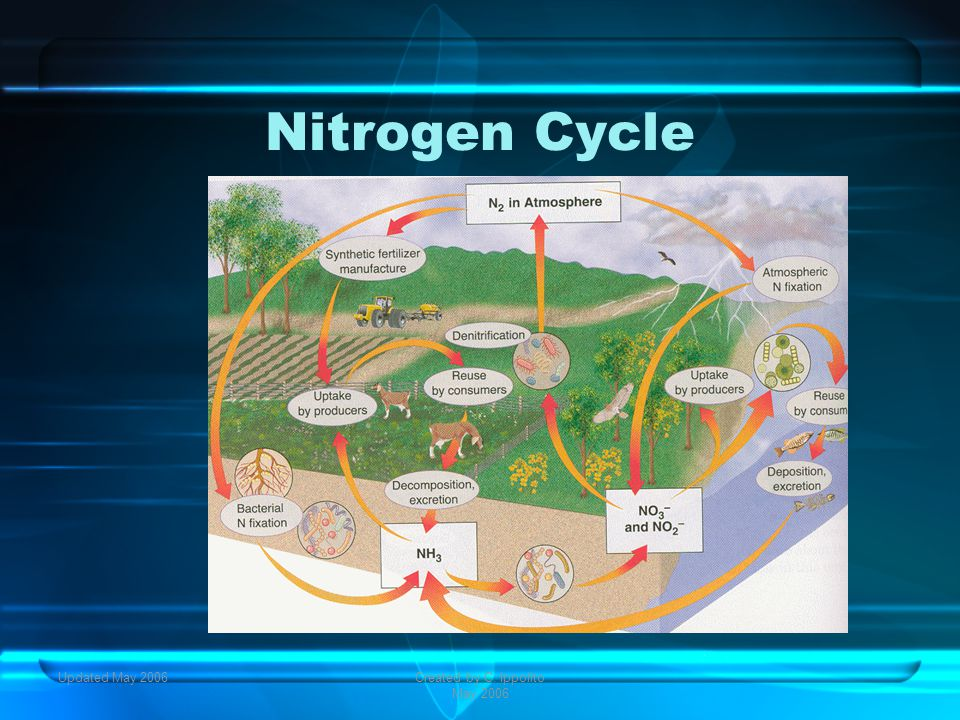 Updated May 2006Created by C. Ippolito May 2006 Carbon Cycle
