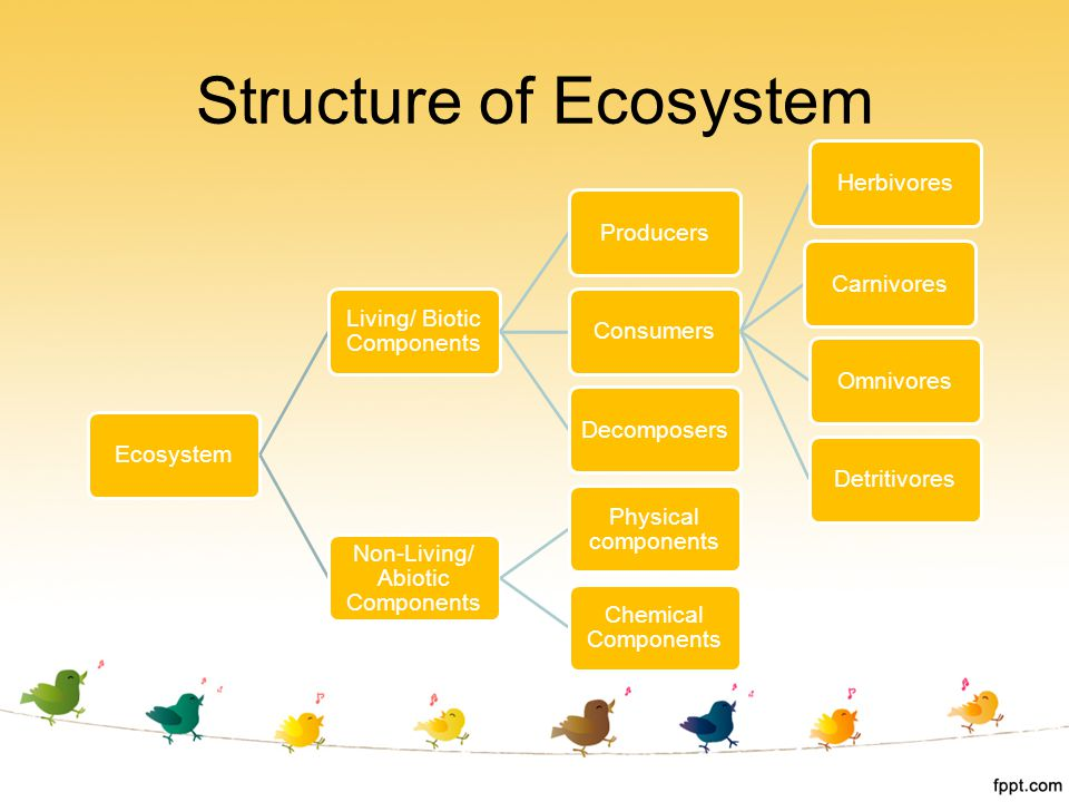 Structure of Ecosystem Ecosystem Living/ Biotic Components ProducersConsumersHerbivoresCarnivoresOmnivoresDetritivoresDecomposers Non-Living/ Abiotic