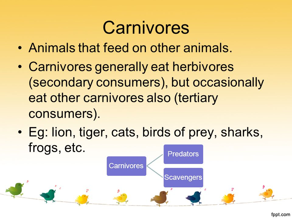 Carnivores Animals that feed on other animals. Carnivores generally eat herbivores (secondary consumers), but occasionally eat other carnivores also (