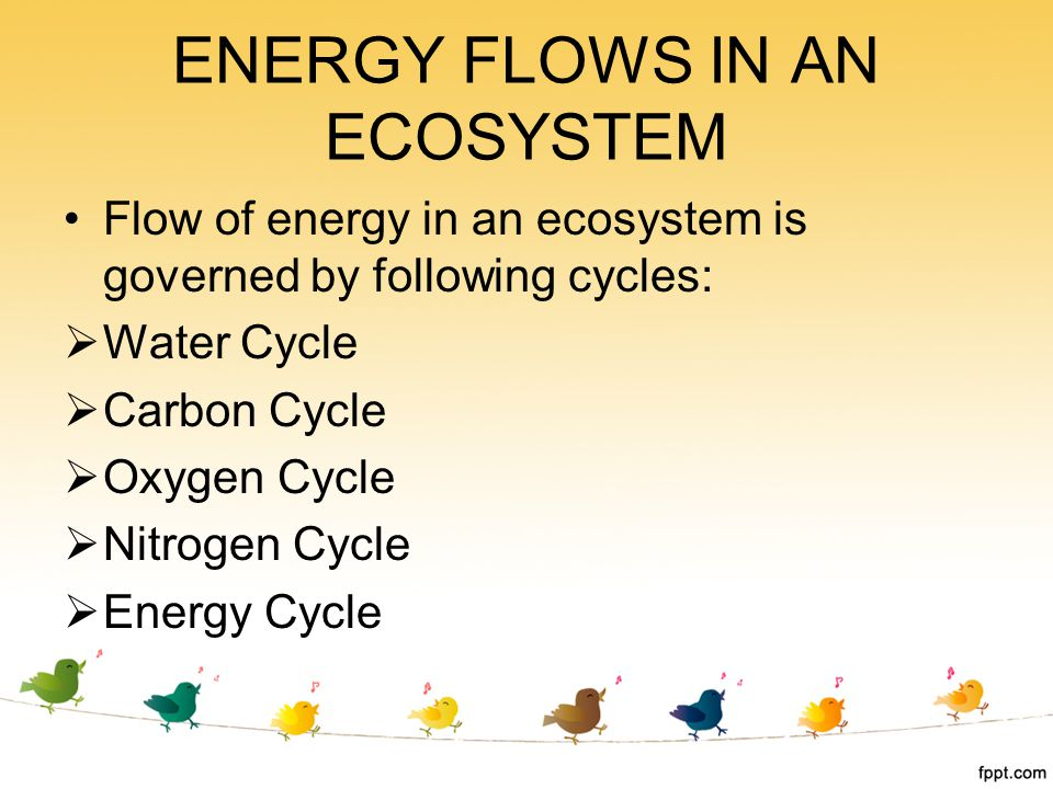 Flow of energy in an ecosystem is governed by following cycles:  Water Cycle  Carbon Cycle  Oxygen Cycle  Nitrogen Cycle  Energy Cycle ENERGY FLO