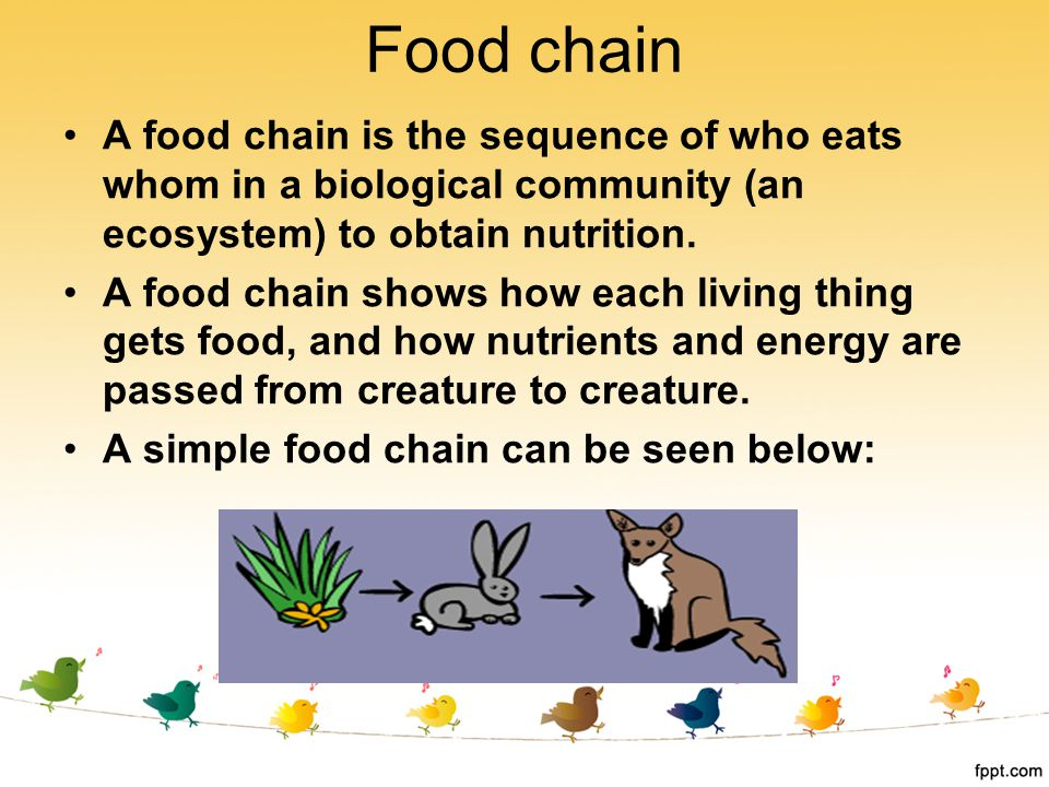 A food chain is the sequence of who eats whom in a biological community (an ecosystem) to obtain nutrition. A food chain shows how each living thing g