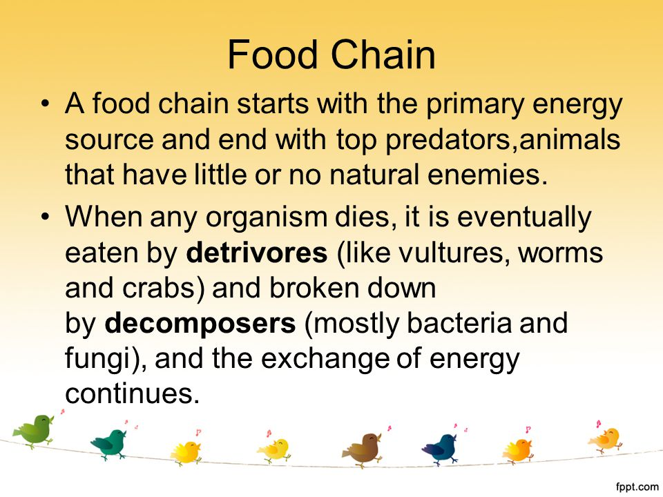 A food chain starts with the primary energy source and end with top predators,animals that have little or no natural enemies. When any organism dies,