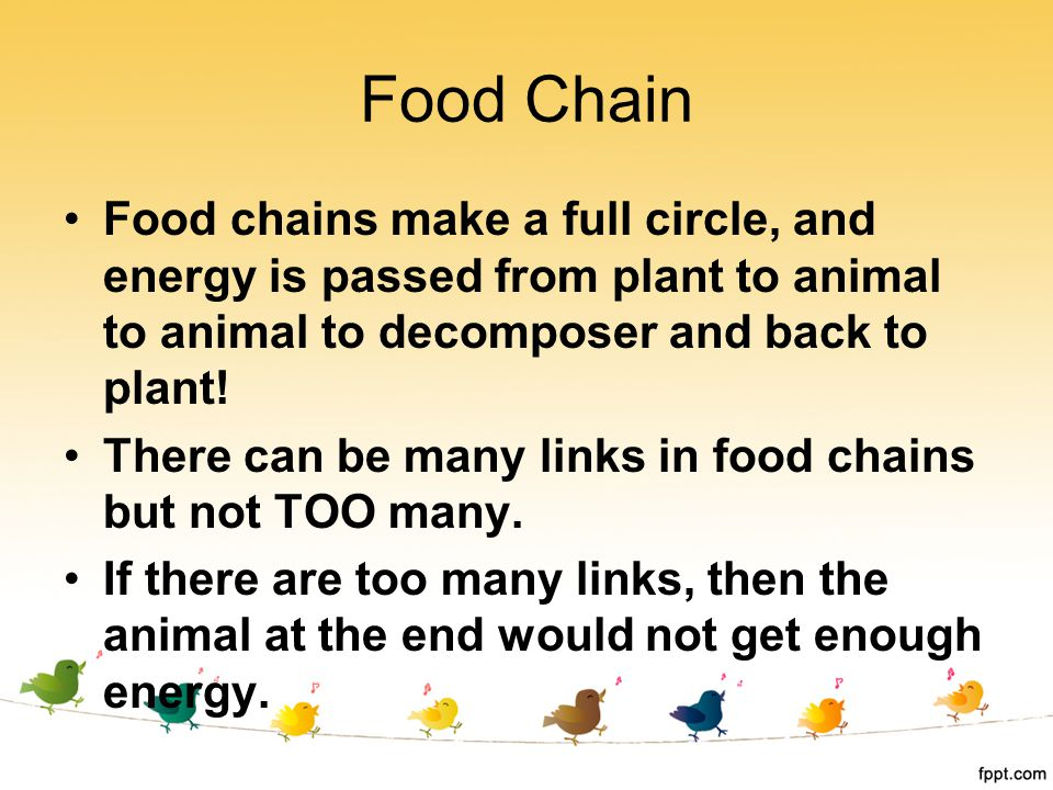 Food chains make a full circle, and energy is passed from plant to animal to animal to decomposer and back to plant! There can be many links in food c