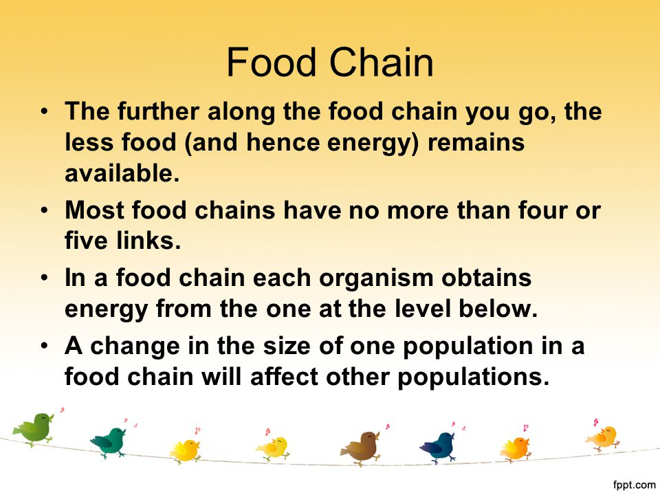 The further along the food chain you go, the less food (and hence energy) remains available. Most food chains have no more than four or five links. In