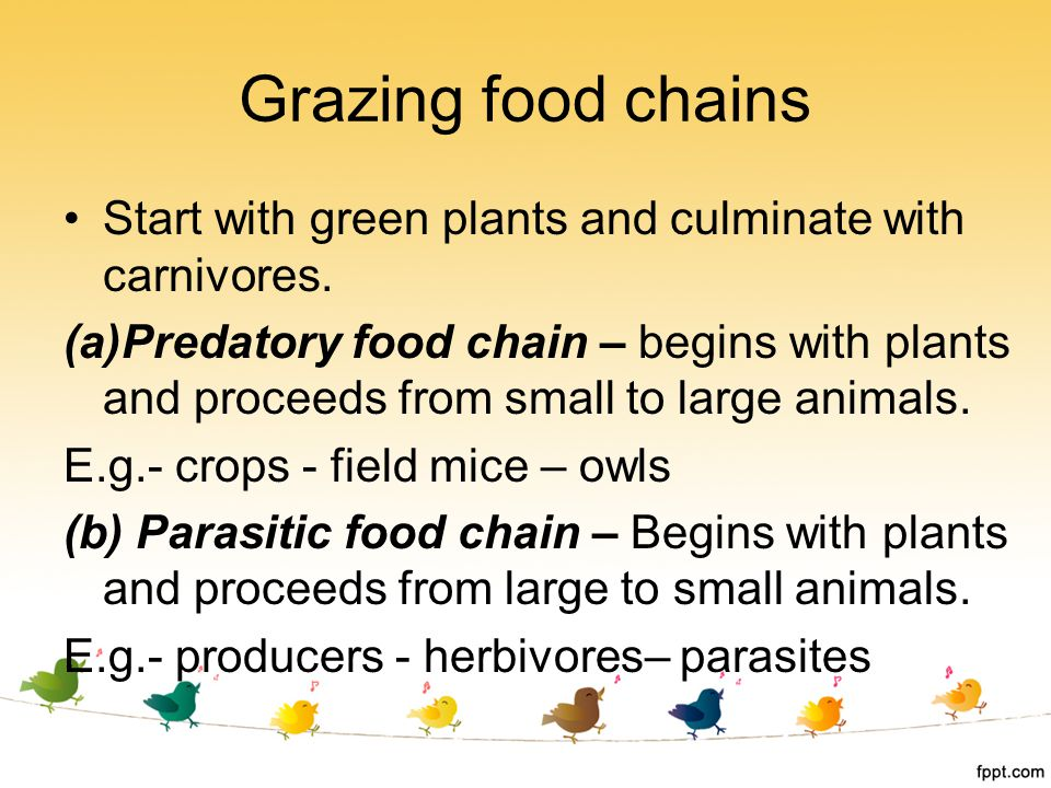 Grazing food chains Start with green plants and culminate with carnivores. (a)Predatory food chain – begins with plants and proceeds from small to lar