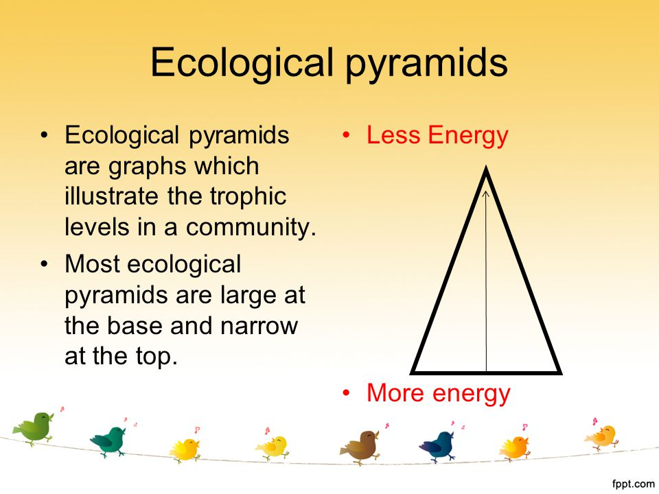 Ecological pyramids are graphs which illustrate the trophic levels in a community. Most ecological pyramids are large at the base and narrow at the to