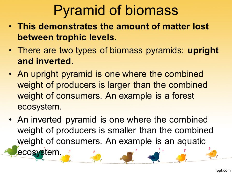 This demonstrates the amount of matter lost between trophic levels. There are two types of biomass pyramids: upright and inverted. An upright pyramid