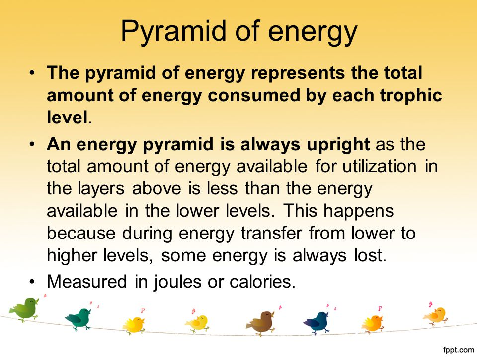 Pyramid of energy The pyramid of energy represents the total amount of energy consumed by each trophic level. An energy pyramid is always upright as t