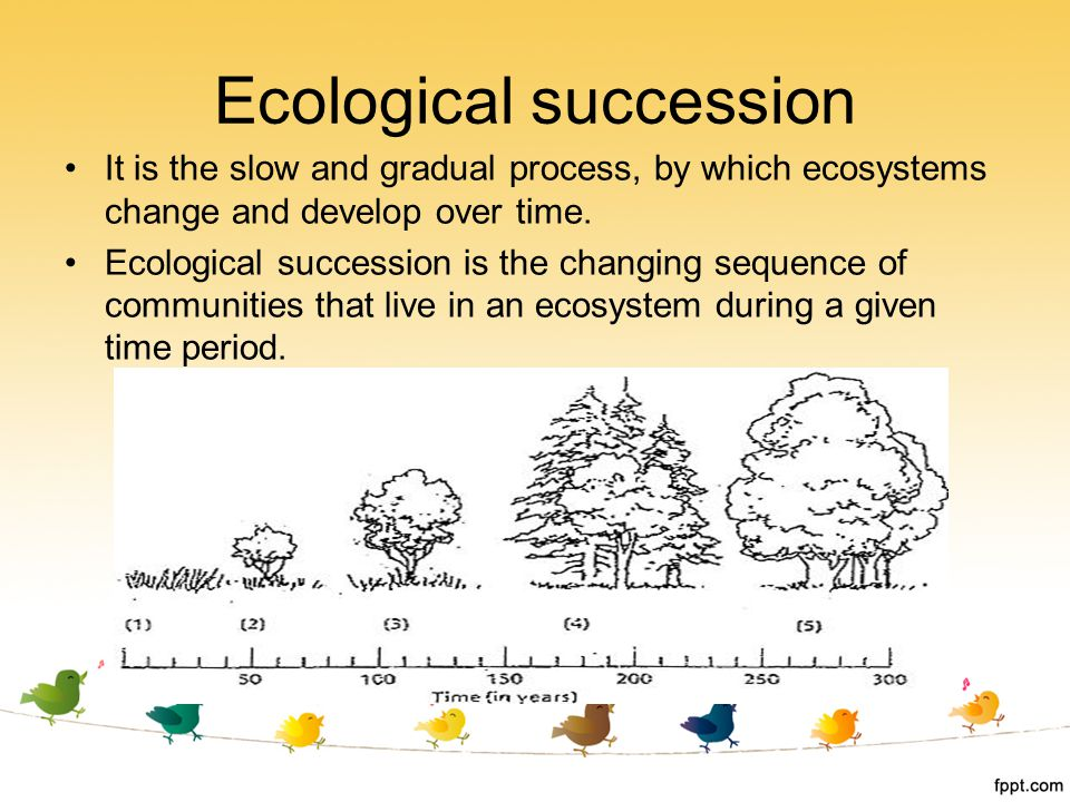 It is the slow and gradual process, by which ecosystems change and develop over time. Ecological succession is the changing sequence of communities th