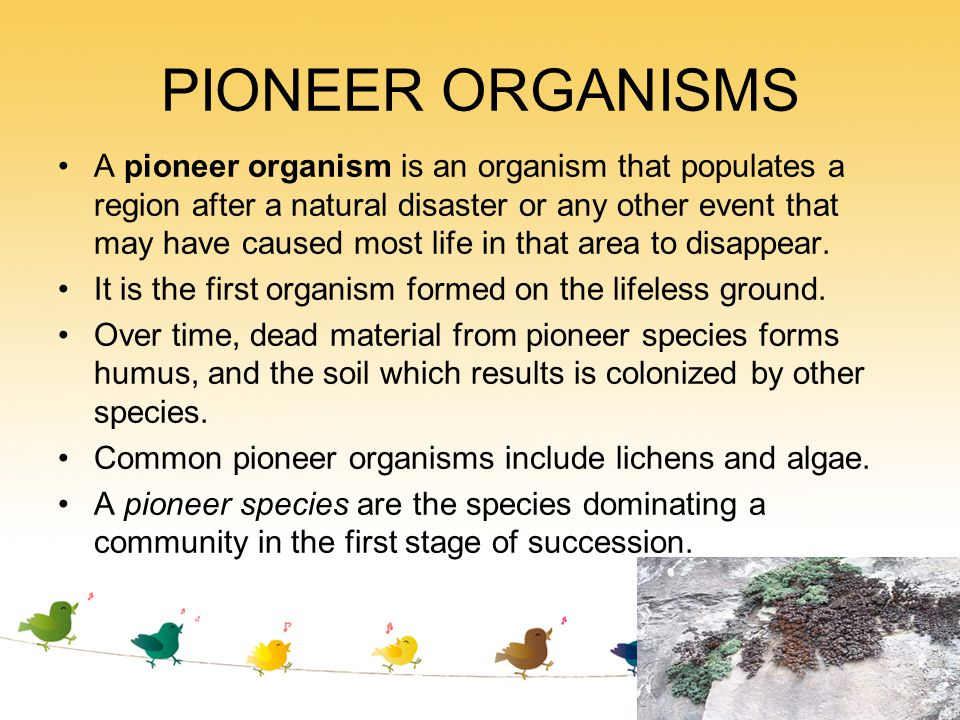 PIONEER ORGANISMS A pioneer organism is an organism that populates a region after a natural disaster or any other event that may have caused most life