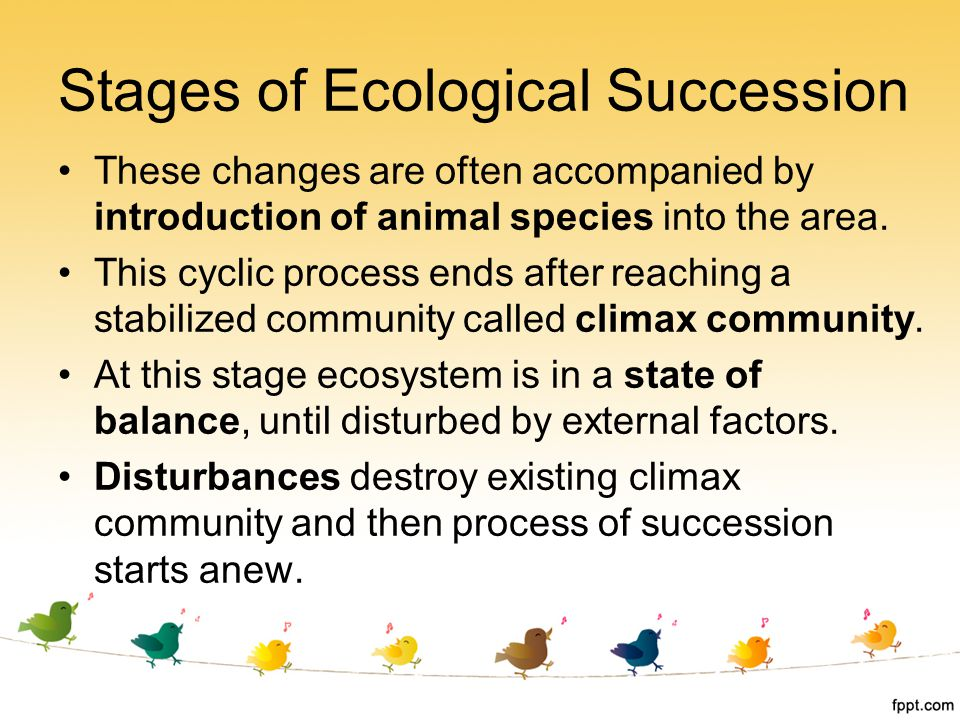 These changes are often accompanied by introduction of animal species into the area. This cyclic process ends after reaching a stabilized community ca