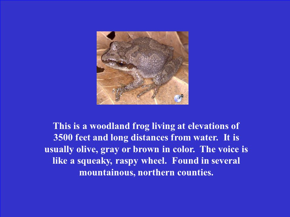 What is the eastern narrowmouth toad?