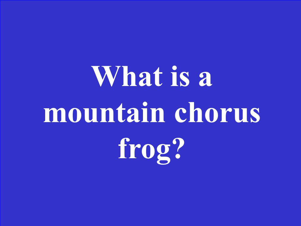 This is a woodland frog living at elevations of 3500 feet and long distances from water. It is usually olive, gray or brown in color. The voice is lik