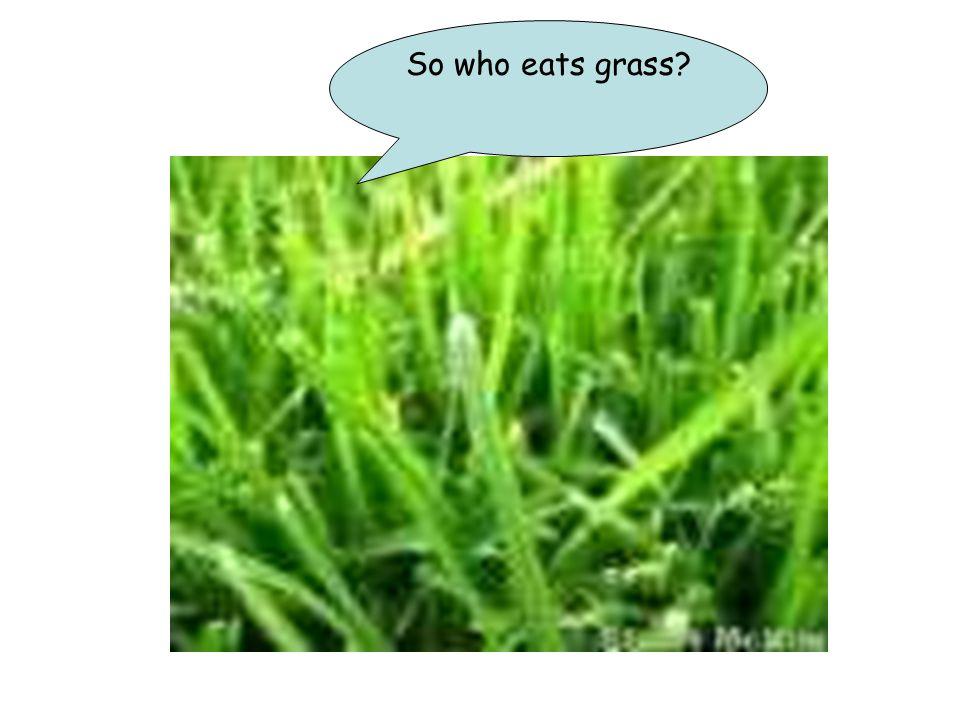 So who eats grass?