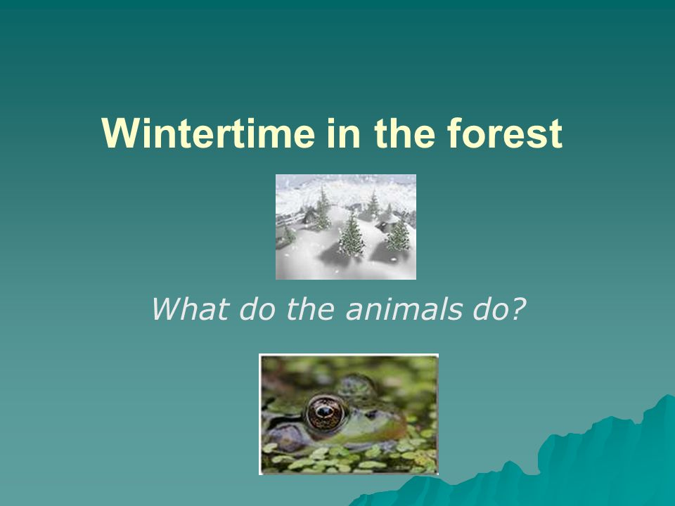 Wintertime in the forest What do the animals do