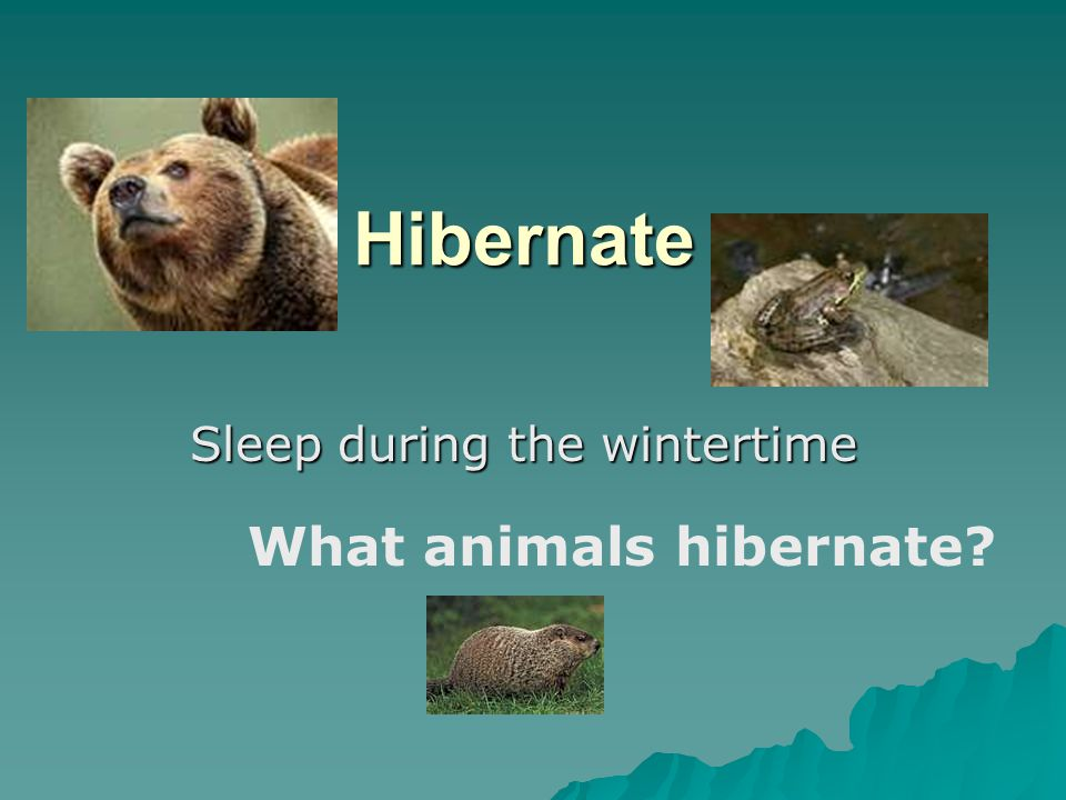 Hibernate Sleep during the wintertime What animals hibernate