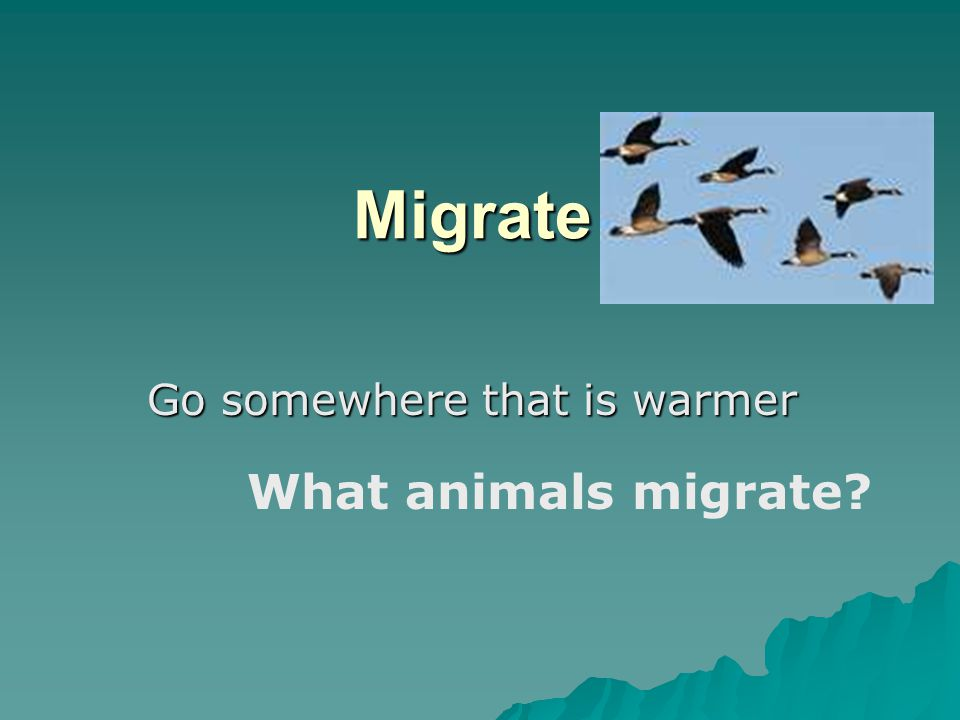 Migrate Go somewhere that is warmer What animals migrate