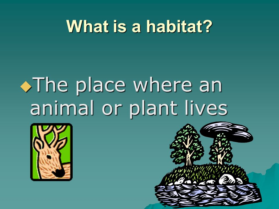 What is a habitat  The place where an animal or plant lives