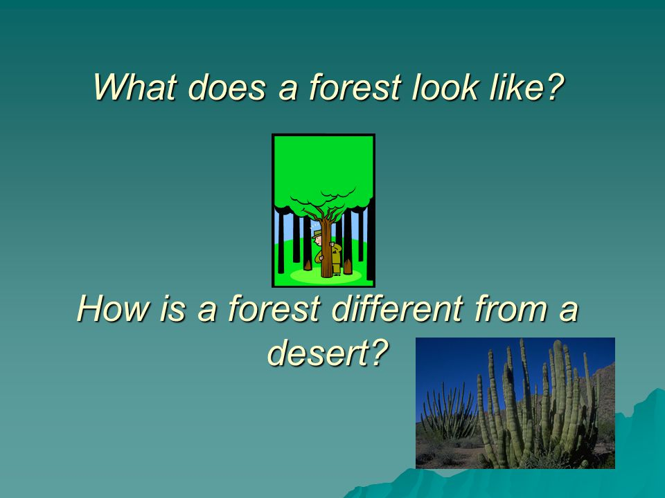 What does a forest look like? How is a forest different from a desert?