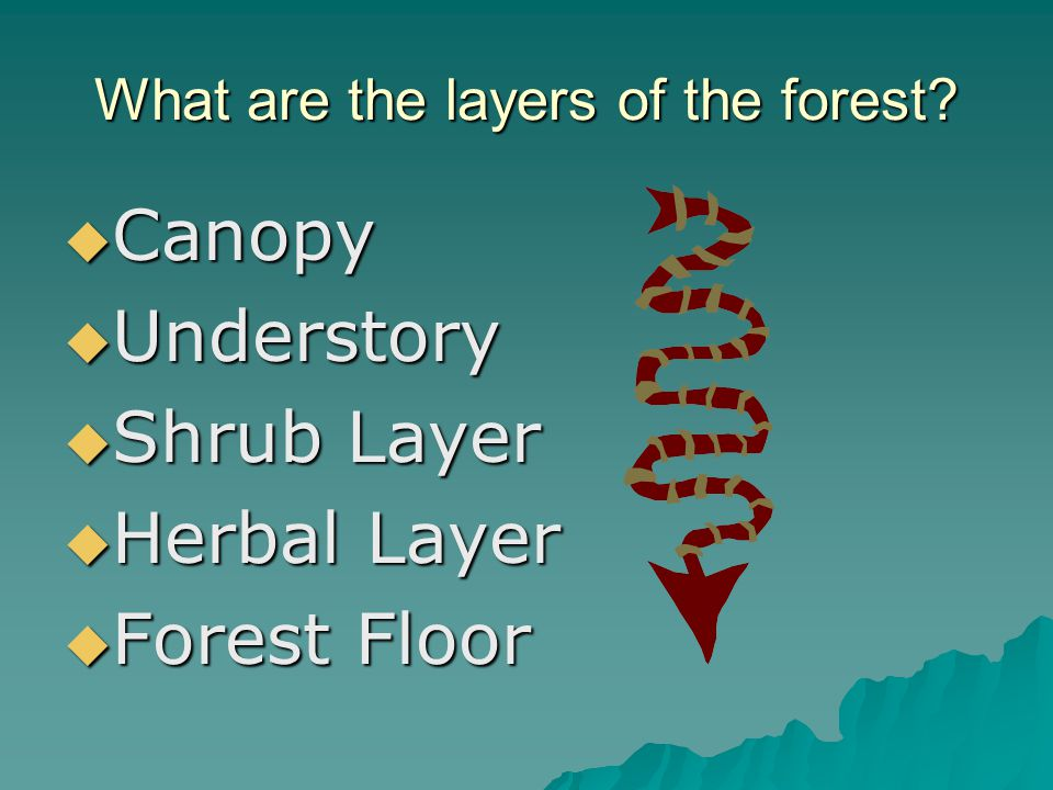 What are the layers of the forest.