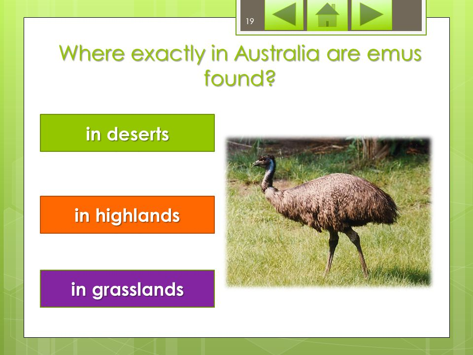What does emu's diet include herbage insects herbage and insects 18/23