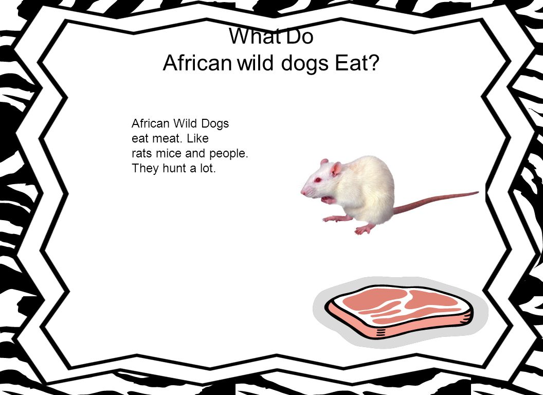 What Do African wild dogs Eat. African Wild Dogs eat meat.