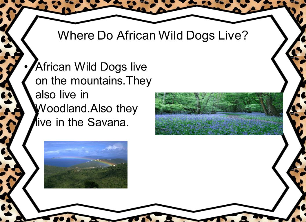 Where Do African Wild Dogs Live.