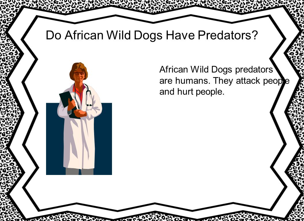 Do African Wild Dogs Have Predators. African Wild Dogs predators are humans.