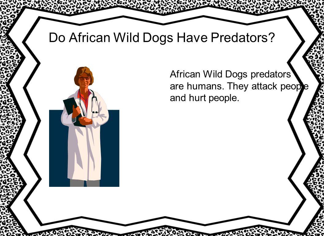 Do African Wild Dogs Have Predators.African Wild Dogs predators are humans.