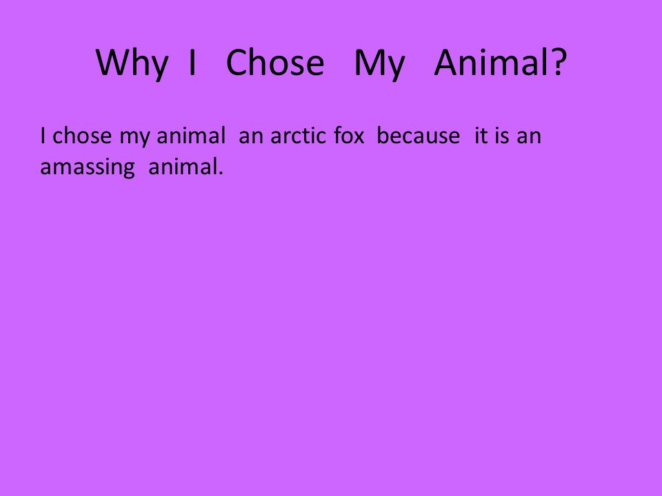Why I Chose My Animal? I chose my animal an arctic fox because it is an amassing animal.