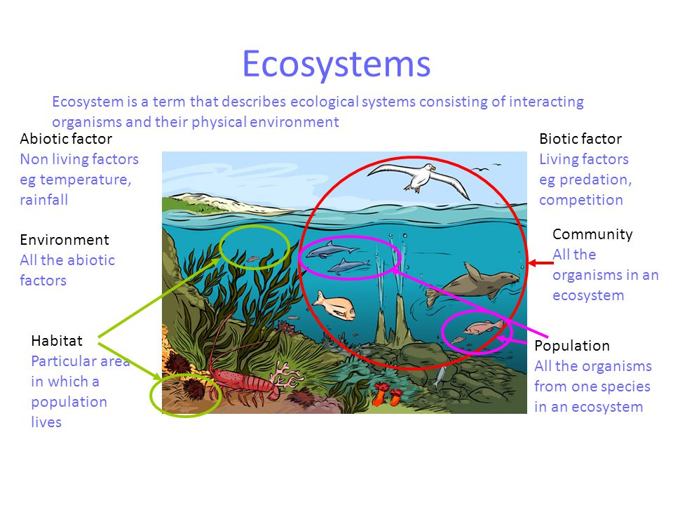 Changes in ecosystems -agriculture Farming  agricultural practices include Monoculture  presence of only one species in the crop, decreases biodiversity, encourages population explosions or plagues of pest species eg mice, locusts, in the long term reduces soil fertility Killing insects (eg pesticides)  disrupts ecosystems by destroying food source of higher order species (eg owls, wattle birds); can lead to ecological magnification Loss of dead/decaying matter  loss of fertility, loss of decomposers  soil problems  reduction in producers  reduction in consumers Fertiliser use  chemical poisoning of plants or animals (eg high phosphate fertilisers kill many native trees; run-off into rivers can cause eutrophication (algal blooms)