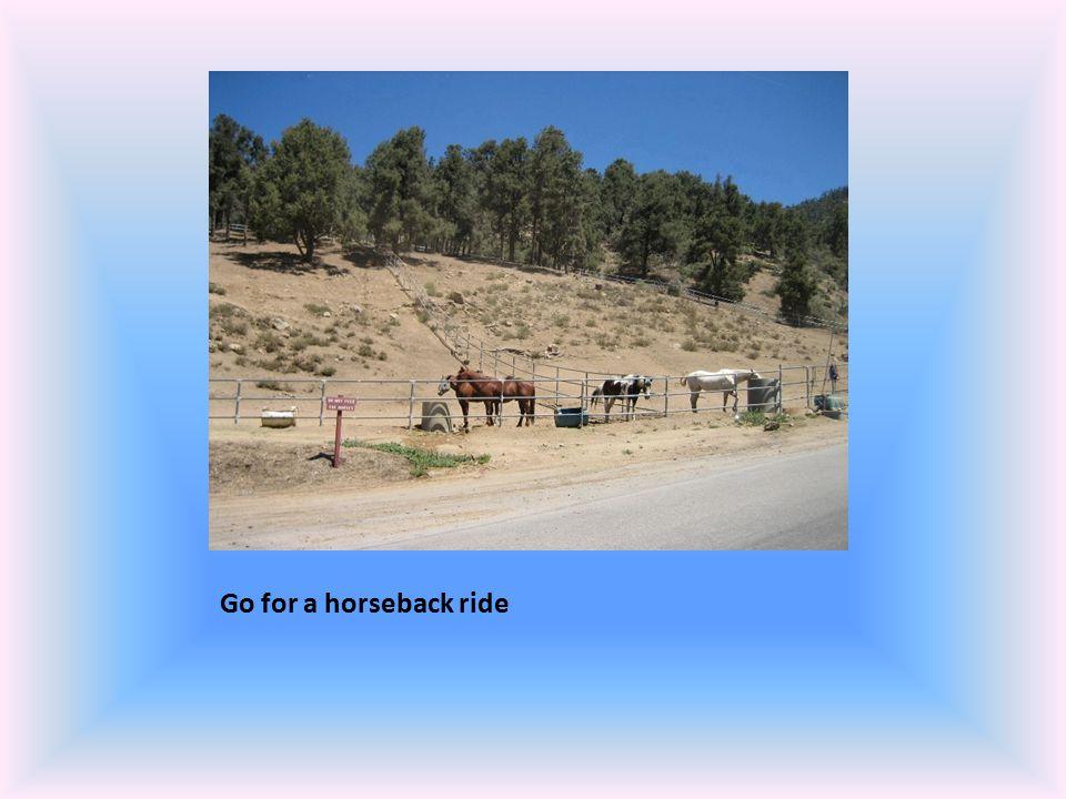 Go for a horseback ride