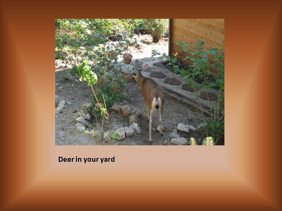 Deer in your yard