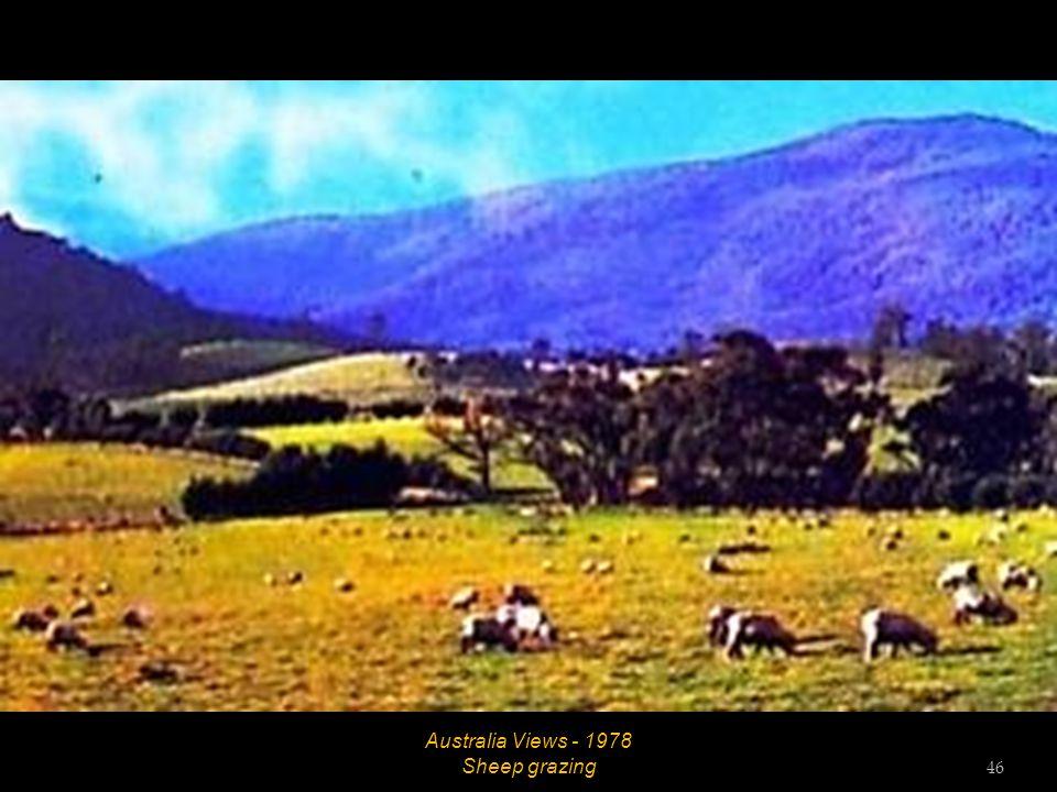 Australia Views - 1978 Woodland scene 45
