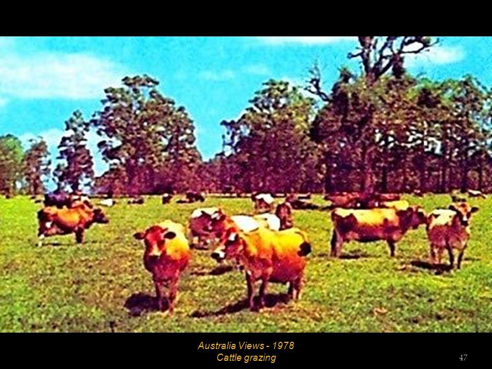 Australia Views - 1978 Sheep grazing 46