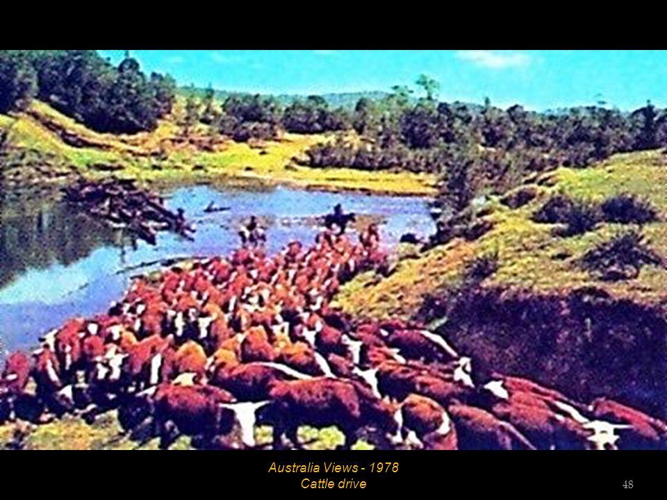 Australia Views - 1978 Cattle grazing 47