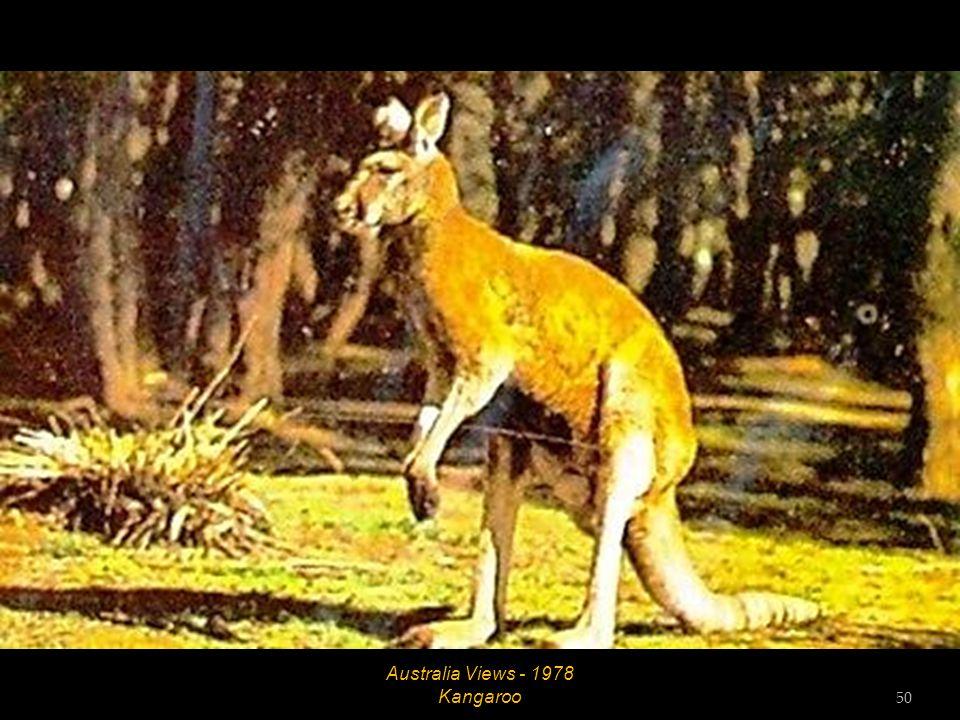 Australia Views - 1978 Rodeo 49