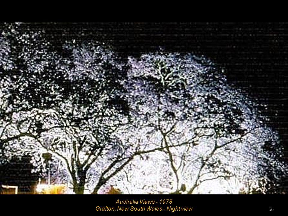 Australia Views - 1978 Grafton, New South Wales - Tree lined avenue 55