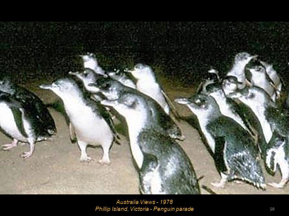 Australia Views - 1978 Phillip Island, Victoria - Seal colony 58