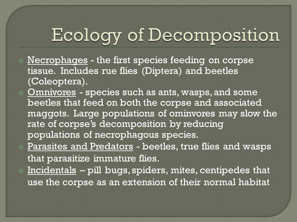  Necrophages - the first species feeding on corpse tissue. Includes rue flies (Diptera) and beetles (Coleoptera).  Omnivores - species such as ants,